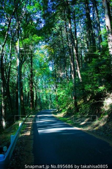 森の中の道路の写真・画像素材[895686]
