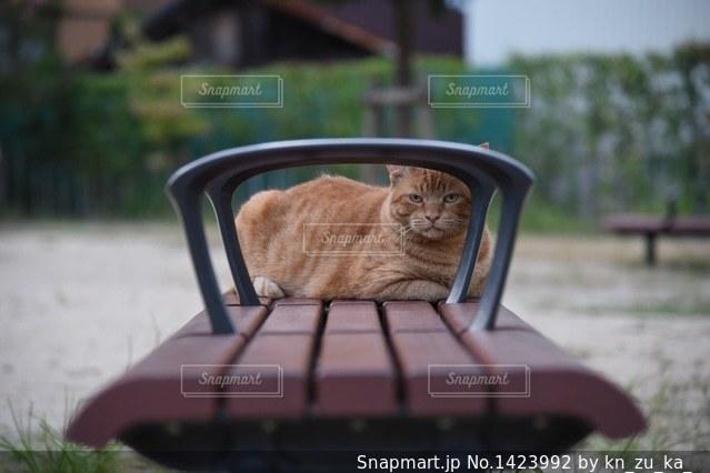 ネコと目が合う朝5時半の写真・画像素材[1423992]