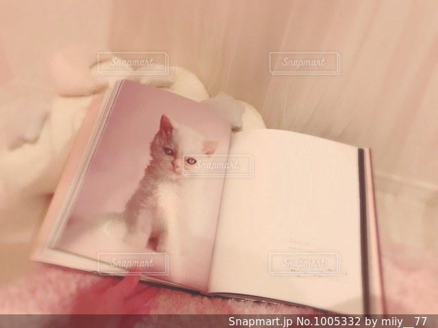猫の本の写真・画像素材[1005332]