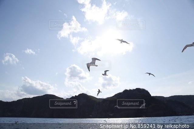 海の上を飛ぶカモメの群れの写真・画像素材[859241]