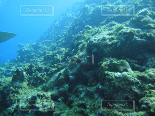 海の中の写真・画像素材[121493]
