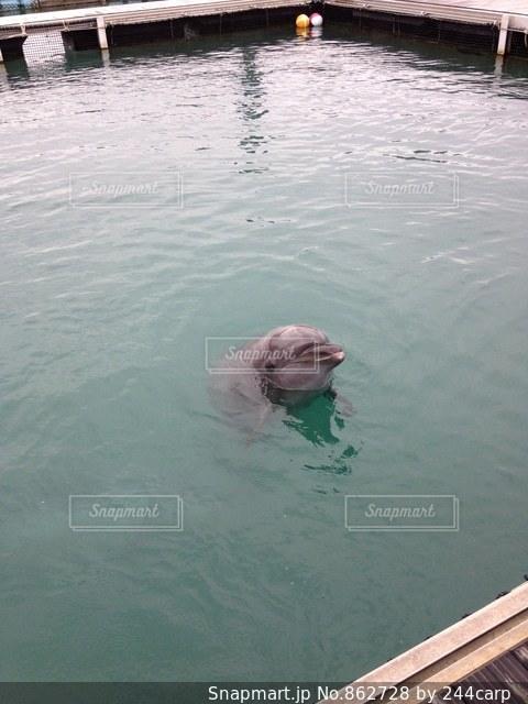 水のプールで泳いでいる犬の写真・画像素材[862728]