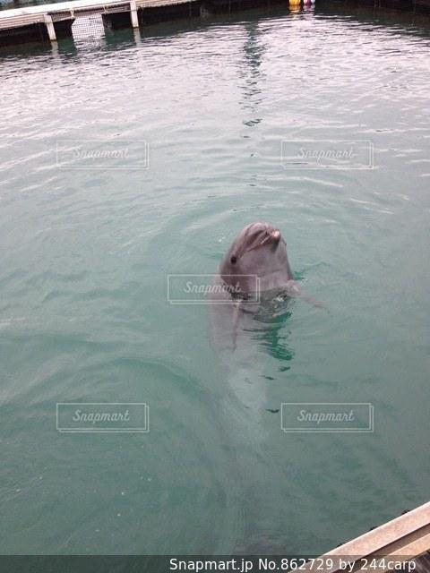 水体で泳ぐ犬の写真・画像素材[862729]