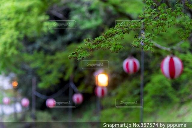 近くに緑のフィールドのの写真・画像素材[867574]