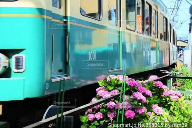 江ノ電と紫陽花の写真・画像素材[868315]