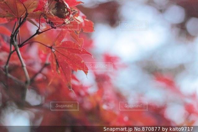 花のぼやけた画像の写真・画像素材[870877]