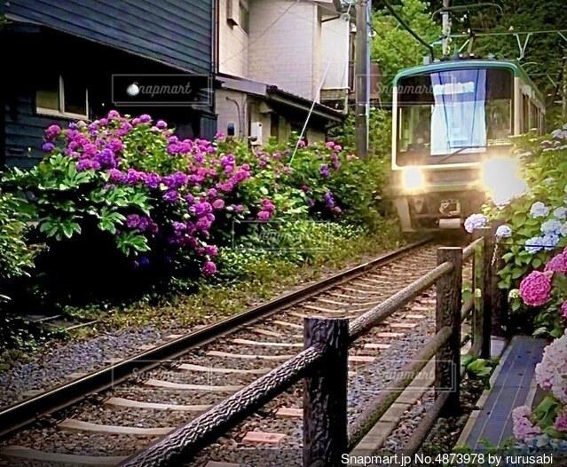 線路の花園の写真・画像素材[4873978]