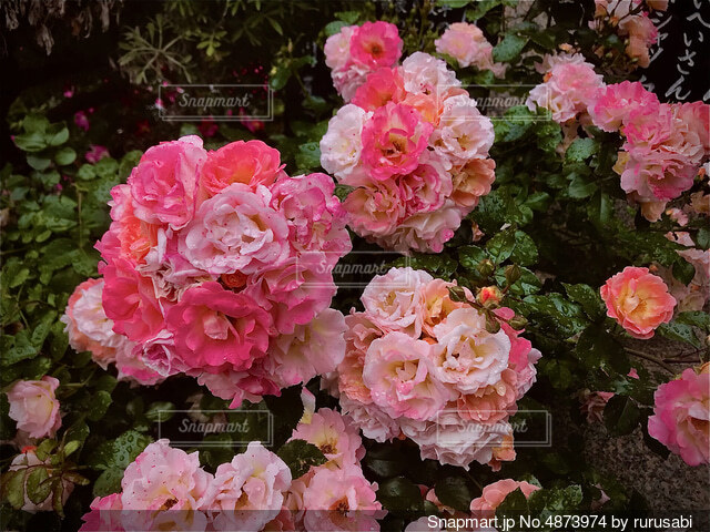 花園No8の写真・画像素材[4873974]
