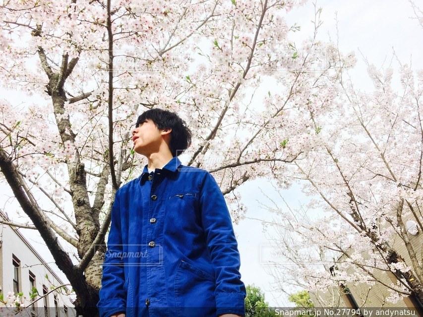 男性,1人,学生,ファッション,自然,風景,公園,花,春,桜の写真素材