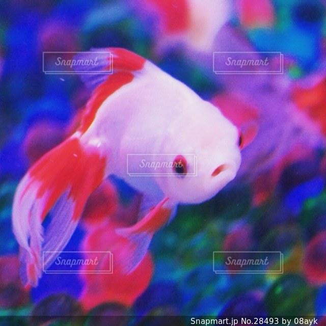 魚の写真・画像素材[28493]
