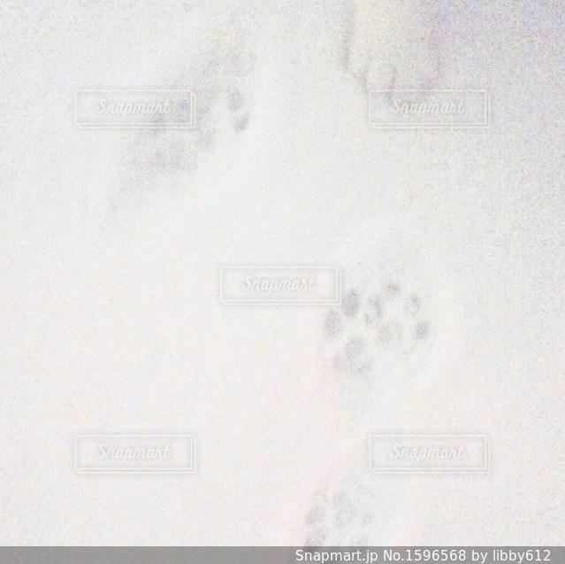 雪の上の猫の足跡の写真・画像素材[1596568]