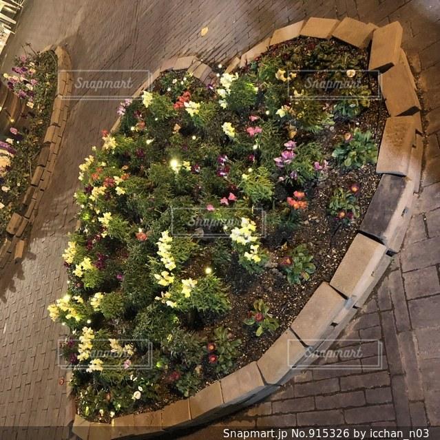 ハート花壇の写真・画像素材[915326]