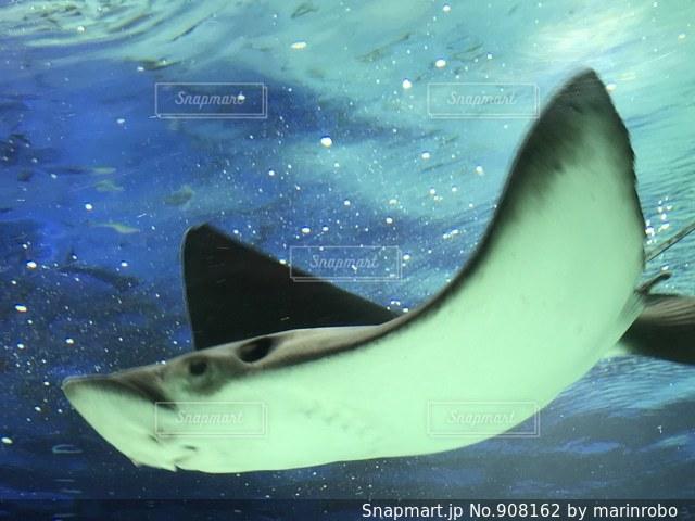 水中を飛ぶの写真・画像素材[908162]