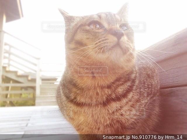 空を見上げる猫の写真・画像素材[910776]