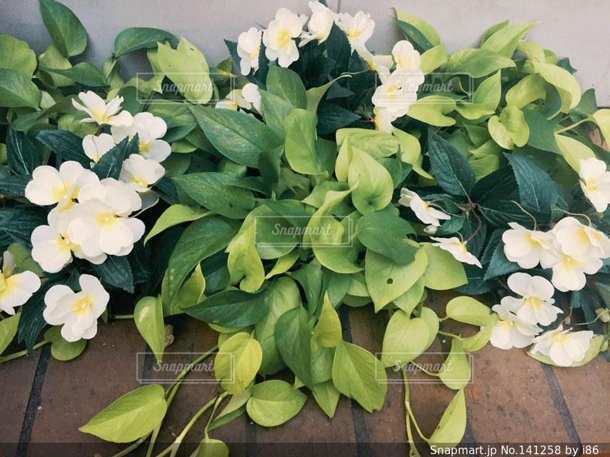 花壇の写真・画像素材[141258]
