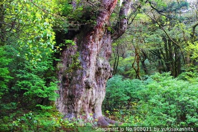 緑豊かな森の真ん中の木 - No.908011