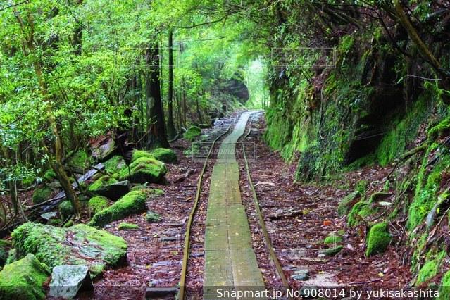 緑豊かな緑の森のトロッコ道 - No.908014