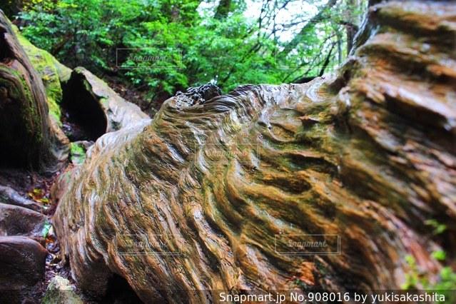 近くの木の横にある岩をの写真・画像素材[908016]