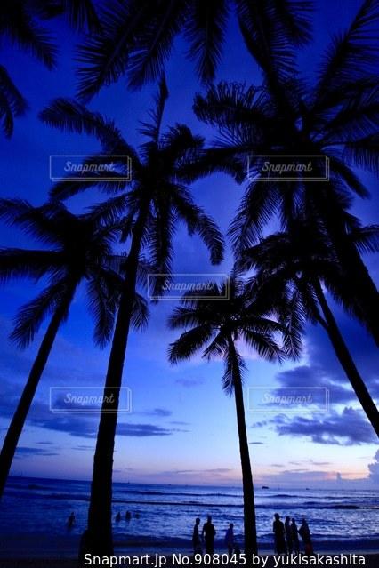 水の体の前でヤシの木とビーチ - No.908045