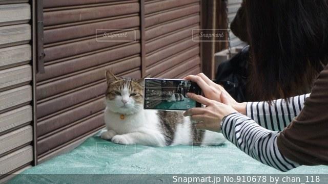 窓の前に座っている猫の写真・画像素材[910678]