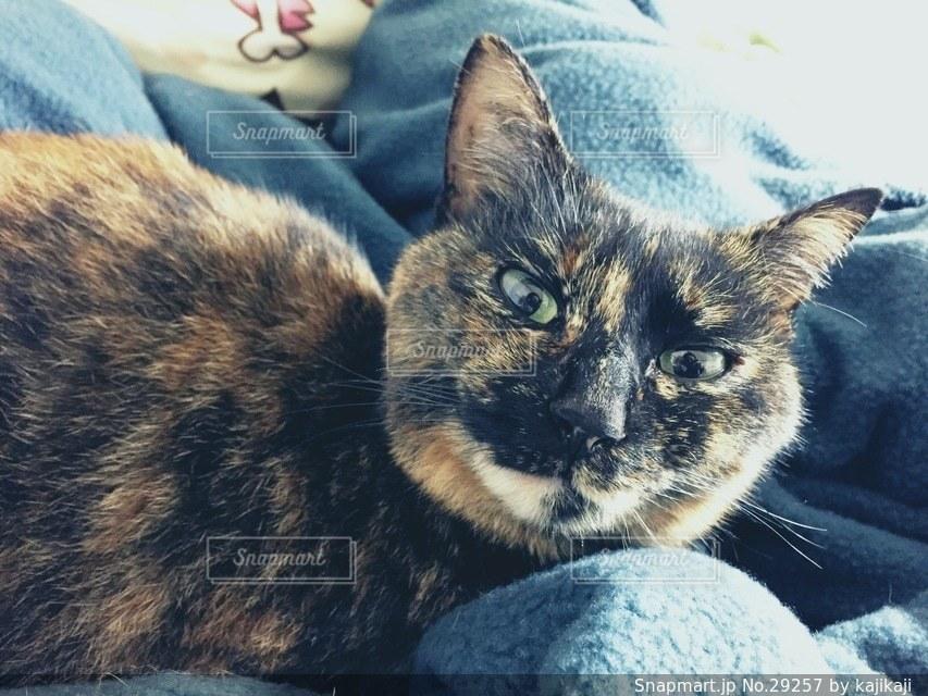 猫の写真・画像素材[29257]