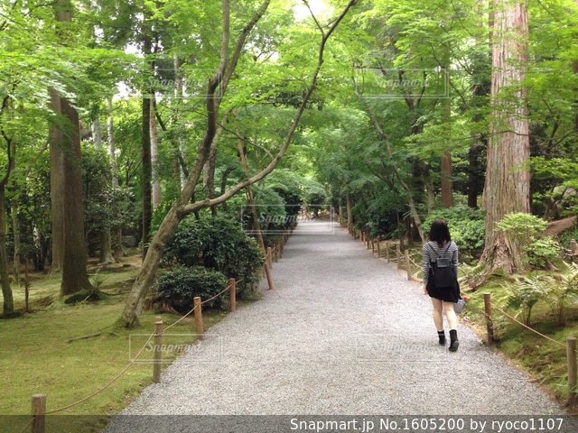 京都で森林浴の写真・画像素材[1605200]