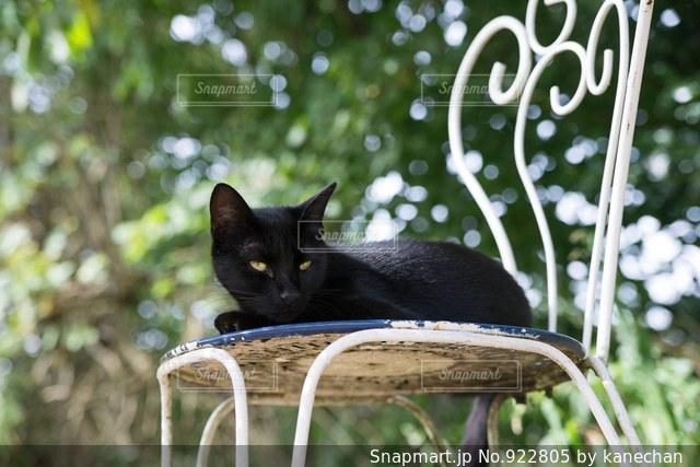 黒猫の写真・画像素材[922805]