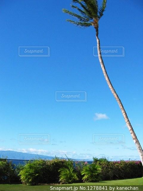 ハワイの写真・画像素材[1278841]