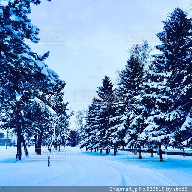 ある雪の日の写真・画像素材[922510]