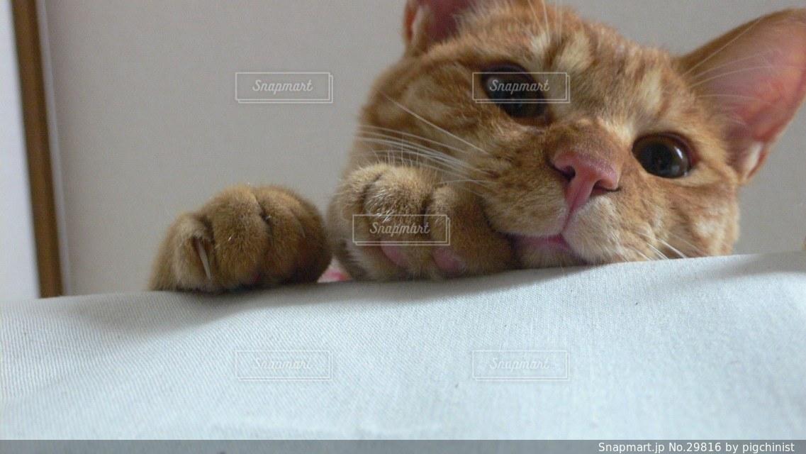 猫の写真・画像素材[29816]