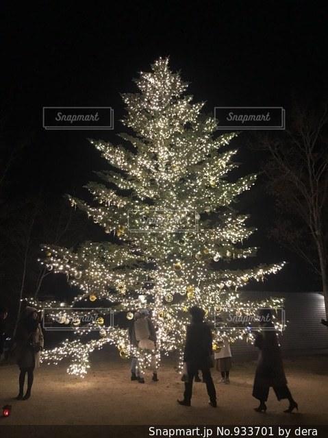 クリスマスツリーの写真・画像素材[933701]