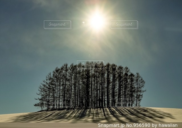 雪に覆われた木の写真・画像素材[956590]