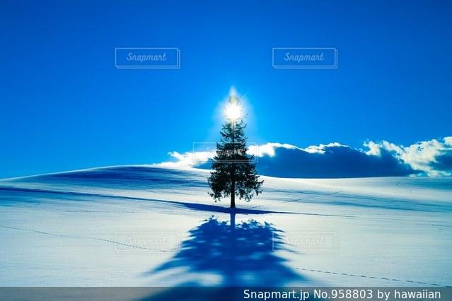 クリスマスツリーの木の写真・画像素材[958803]