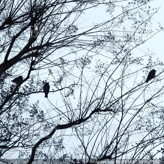 冬の日の写真・画像素材[945467]