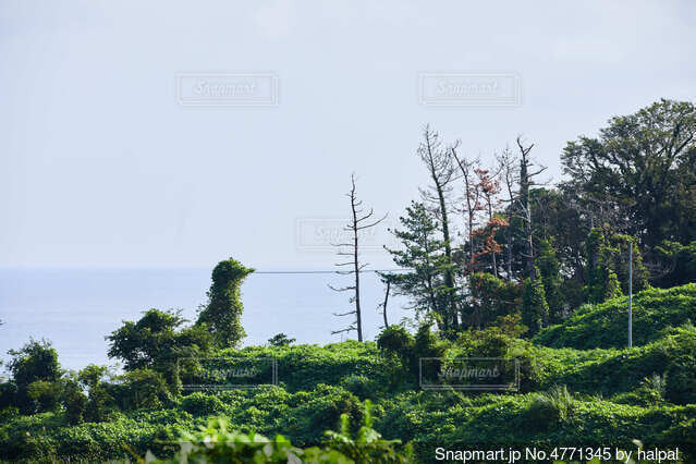 鳥に見える茂みと海と空の写真・画像素材[4771345]