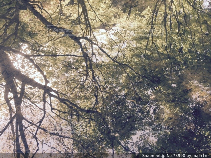 森林 - No.78990