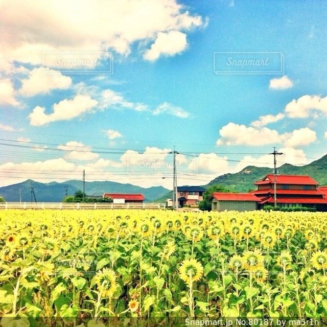 夏の写真・画像素材[80187]
