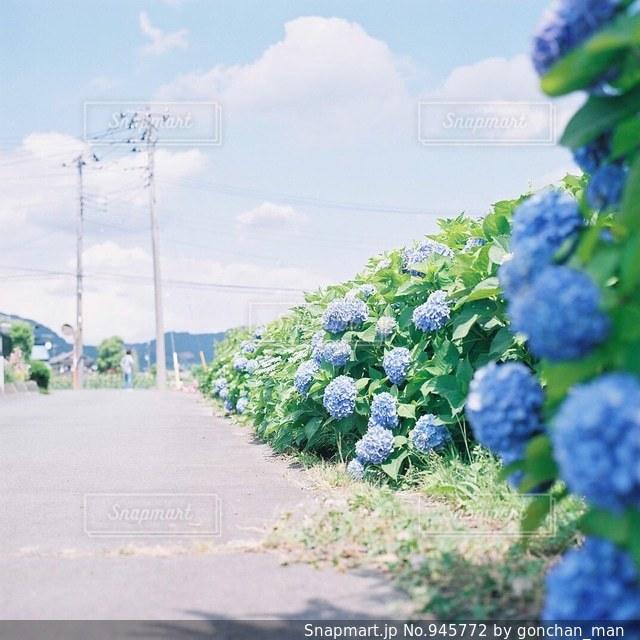 32の写真・画像素材[945772]