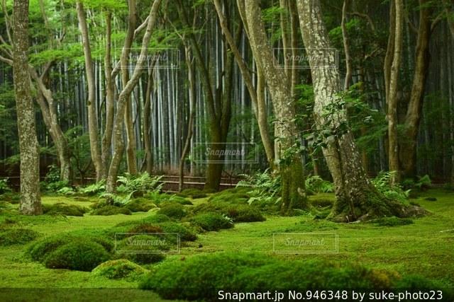 京都の祇王寺の写真・画像素材[946348]