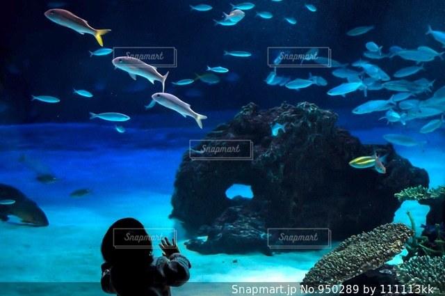 魚を見上げる子供の写真・画像素材[950289]