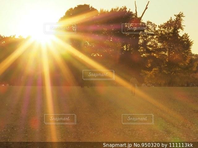 秋の日差しの写真・画像素材[950320]