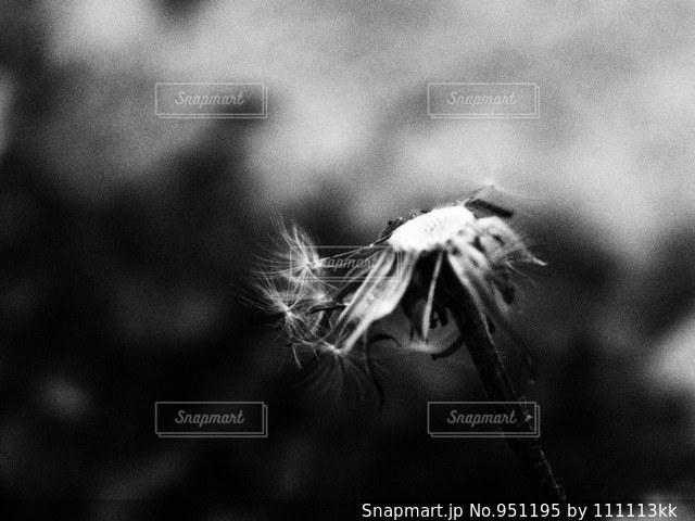 残りの命の写真・画像素材[951195]
