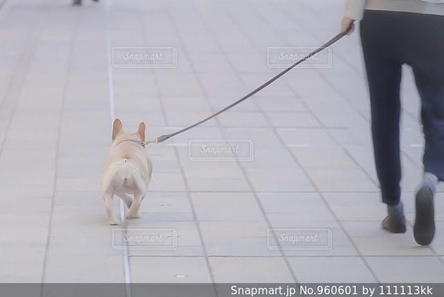 散歩の写真・画像素材[960601]