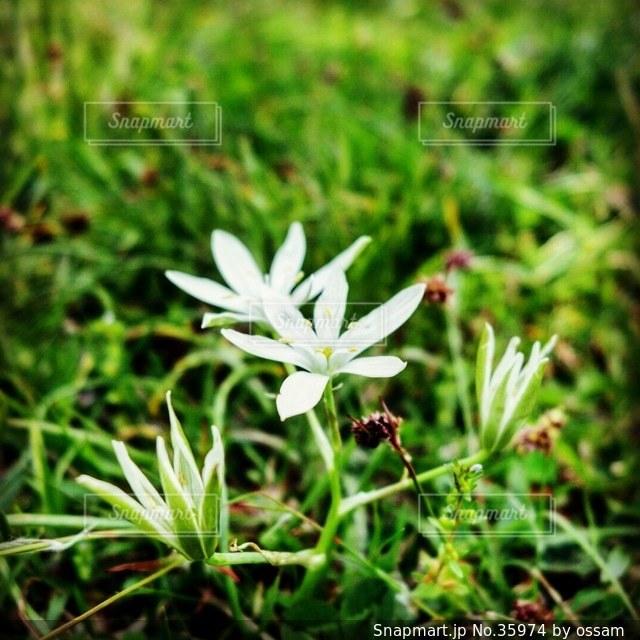 自然の写真・画像素材[35974]