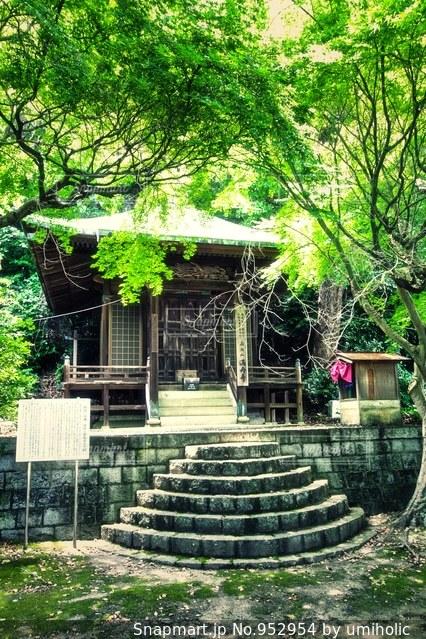 家の前に木の写真・画像素材[952954]