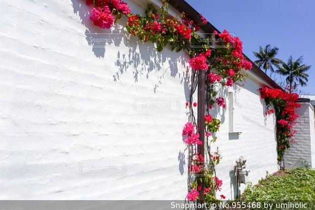 花と家の写真・画像素材[955468]