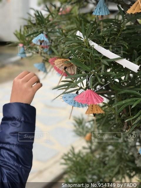 カラフルな傘のおみくじの写真・画像素材[954749]