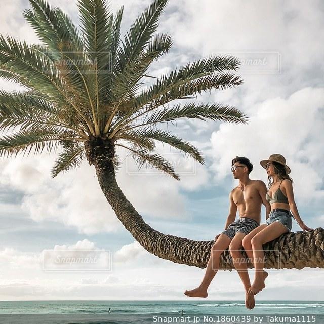 ハワイ、ヤシの木の写真・画像素材[1860439]