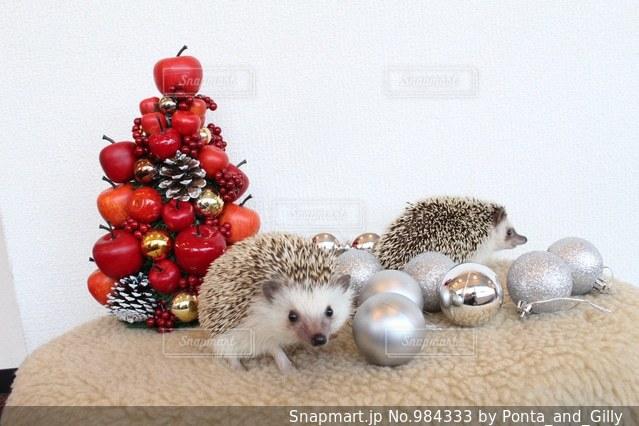はりねずみのクリスマスの写真・画像素材[984333]