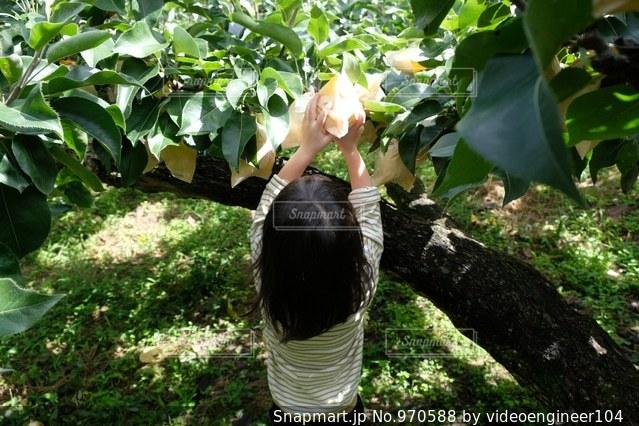 木の枝にとまった鳥の写真・画像素材[970588]